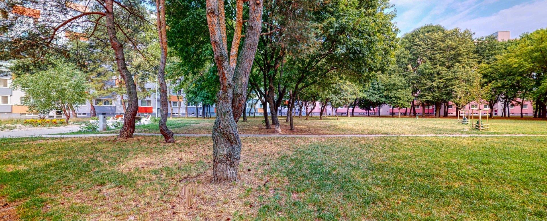 Pohľad na stromy
