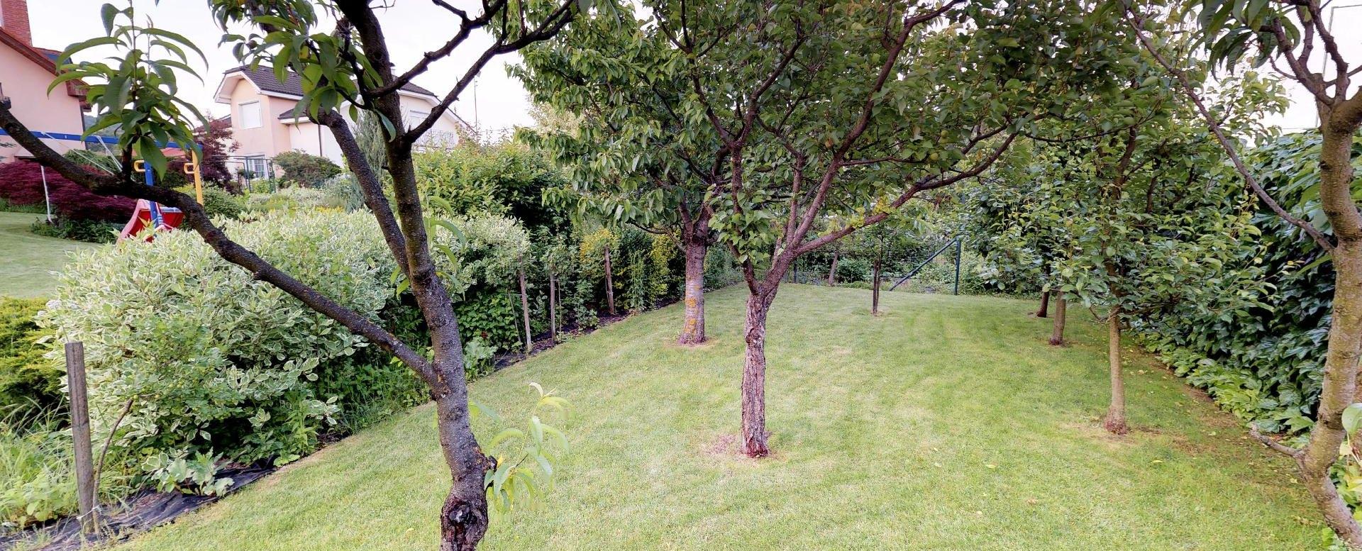 Ovocné stromy v záhrade